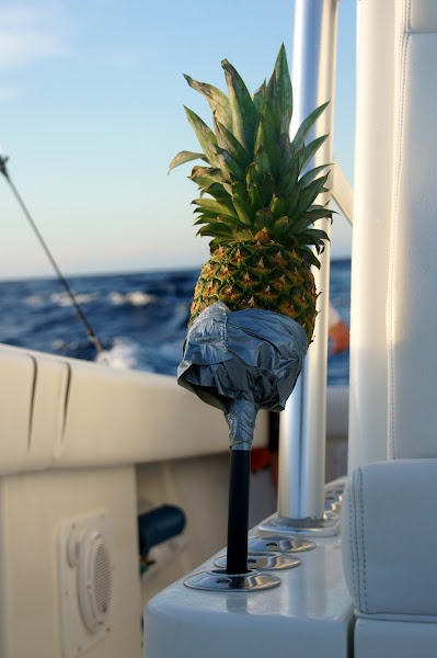 Photo: Our lucky pineapple for the 2011 Texas International Fishing Tournament, T.I.F.T. out of South Padre Island, Texas. By Cali Bock