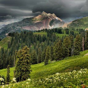 ~kennebec pass~ by Kirk Kimble - Landscapes Travel ( mountains, vacation, colorado, flowers, wild flowers )