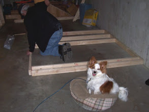 Photo: Here's a flattering shot of my dad while framing one of the side walls. And there's Watson, relaxing in his bed and keeping an eye on everything. :)