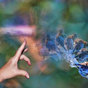Flip The Bird by Stacey Nagy - Digital Art Things