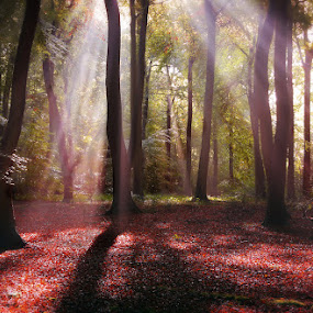 Light in the Forest by Ceri Jones - Landscapes Forests