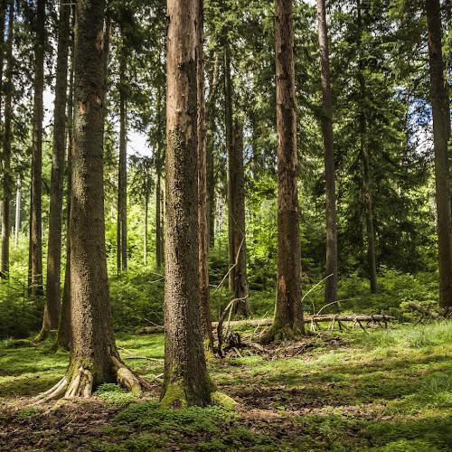 Das Waldgebiet bei Enzklösterle nennt sich Bärlochkar und ist ein Bannwaldgebiet