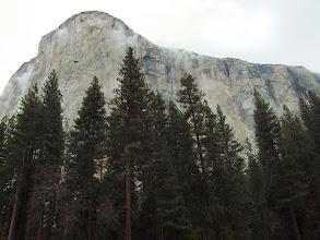 Photo: El Capitan, from EC meadow, Day 2. S95. #3549