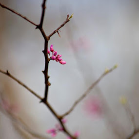 Buds by Tiffany Bailey - Nature Up Close Trees & Bushes