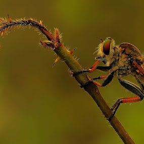 Stand up by Faiq Alfaizi - Animals Insects & Spiders