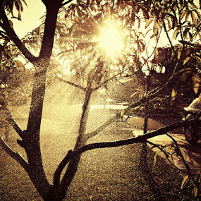 Sunshower by Teresa Beteta - Abstract Water Drops & Splashes ( water, tree, mango, sun, rain )