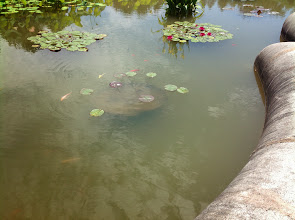 Photo: fish in the reflecting pool