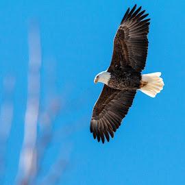 by Margie Troyer - Animals Birds