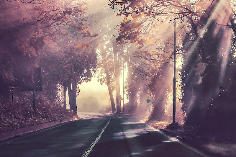 Luce e ombra di elisabetta_nobili