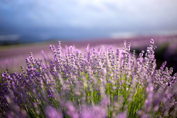 Bridestowe Lavender: Blossoming with digital marketing
