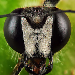 The Face by Endra  Dharmalaksana - Animals Insects & Spiders