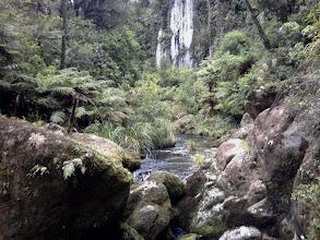 Photo: Along Ngatuhoa Stream below the Falls