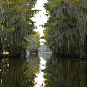 Caddo Lake 1 by Anna Cole - Landscapes Waterscapes ( water, reflection, waterscape, texas, lake caddo, cypress, trees, lake, forest, trip, pass,  )