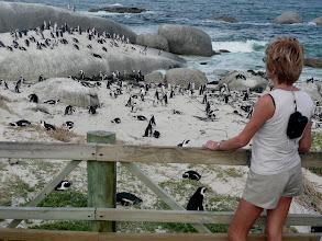 Photo: Jackass-Pinguin-Kolonie am Boulders Beach