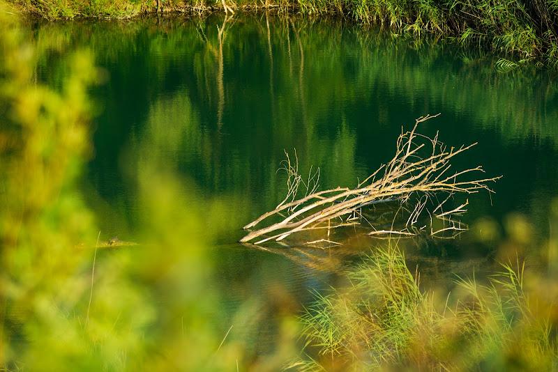Riflessi sull'acqua verde di thewhiskeybarphotos