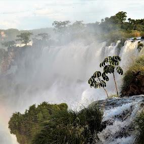 Iguazu Falls by Sheri Fresonke Harper - Landscapes Waterscapes ( argentina, iguazu falls, vegetation, rainbow, mist,  )