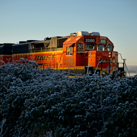 BNSF  by Todd Reynolds - Transportation Trains