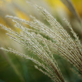 by Lori Rider - Nature Up Close Leaves & Grasses