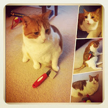 Photo: Cat morning brush ritual #cat #catstagram #pet #brush #intercer #morning #play - via Instagram, http://instagr.am/p/MYamyAJfp6/