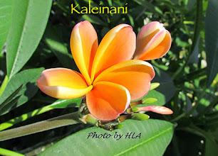Photo: Kaleinani