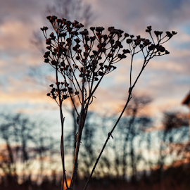 Good evening  by Todd Reynolds - Nature Up Close Other plants