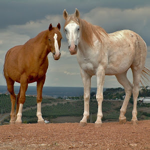 cavalos 029.jpg
