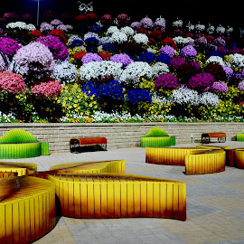 When Colour speak for themselves by Nadeem M Siddiqui - City,  Street & Park  City Parks