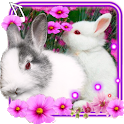 Funny Bunnies live wallpaper icon