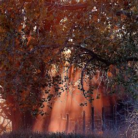 Sun Beams ! by Jan Siemucha - Landscapes Prairies, Meadows & Fields ( cloud of dust, fence, dust, trees, pwcsunbeams-dq, weeds, dirt, sun )