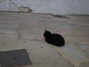 Photo: ... a cat