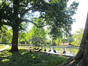 Photo: A line of Canadian geese by the pond at Eastwood Park in Dayton, Ohio.