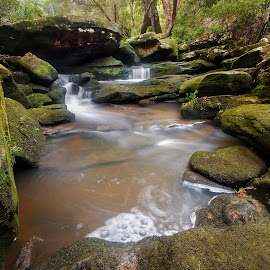 Stream by Geoffrey Wols - Nature Up Close Water ( forest, green, rocks, waterfall, bush, central coast, girakool, water,  )