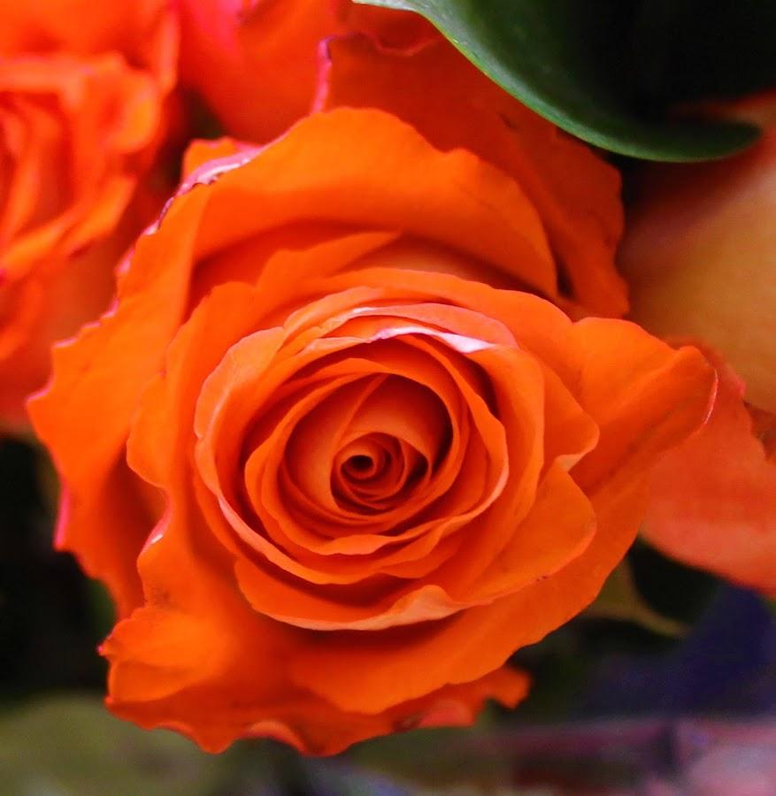 by Denise O'Hern - Flowers Flower Arangements (  )