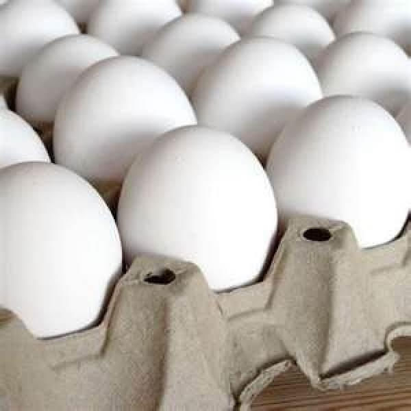 Egg Secrets