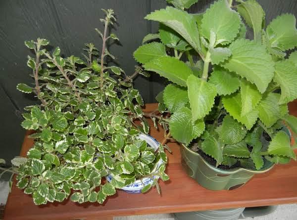 Plant Identification Recipe