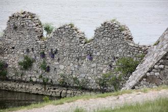 Photo: Day 82 - Golubac Fortress #3