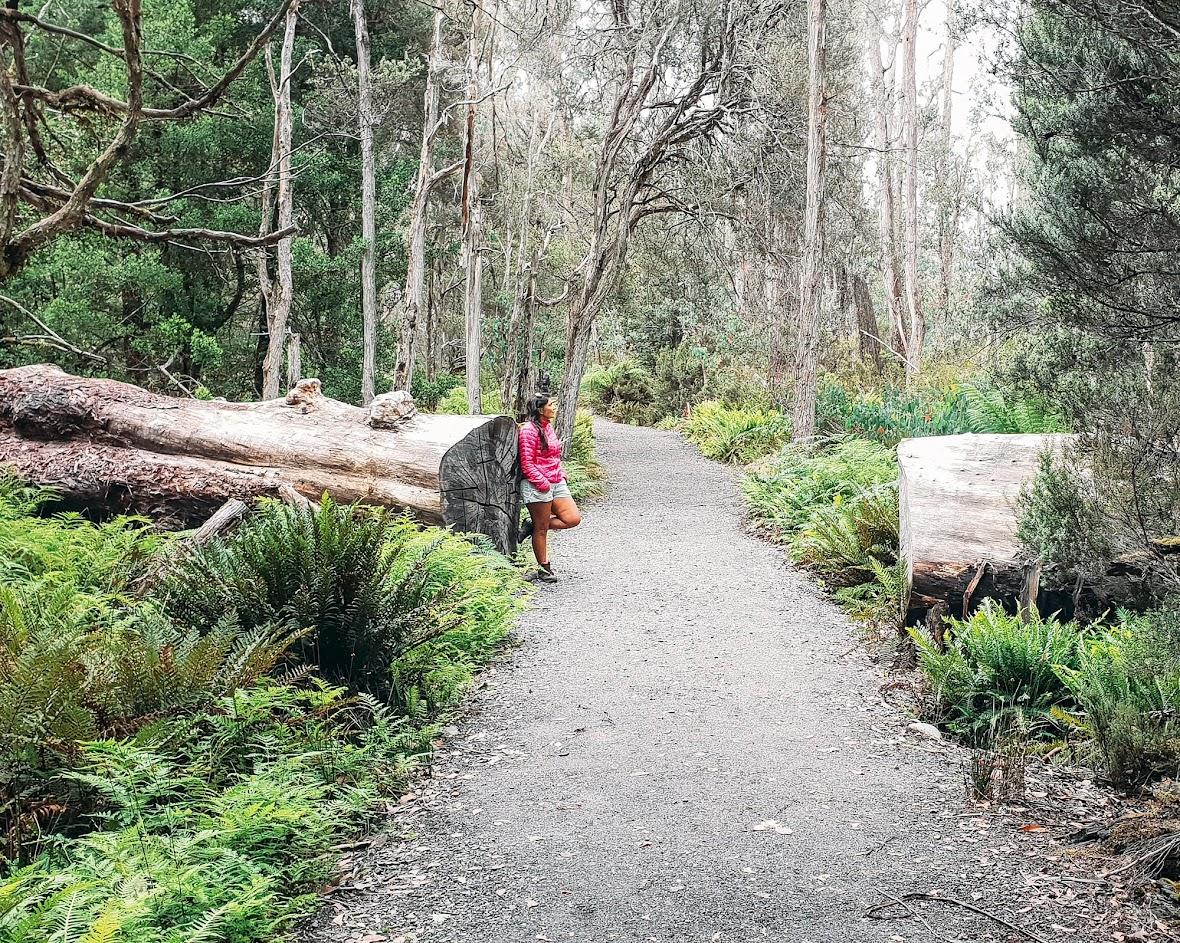 VIAJAR NA TASMÂNIA - O que ver e fazer na Tasmânia num roteiro de 5 dias | Austrália