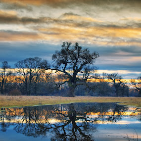Mirror mirror by Zsolt Zsigmond - Nature Up Close Trees & Bushes ( clouds, orange, reflection, hdr, colorful, waterscape, cloudscape, landscape, mirror, field, sky, tree, nature, sunset, pond, skyscape,  )