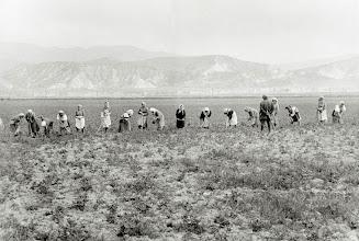 Photo: Campagne di Ferrandina 1960 - Foto di Mario Carbone