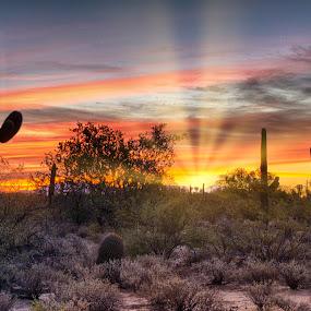 First Light by Charlie Alolkoy - Landscapes Sunsets & Sunrises ( tuscon, desert, sunset, arizona, sunrise, cactus )