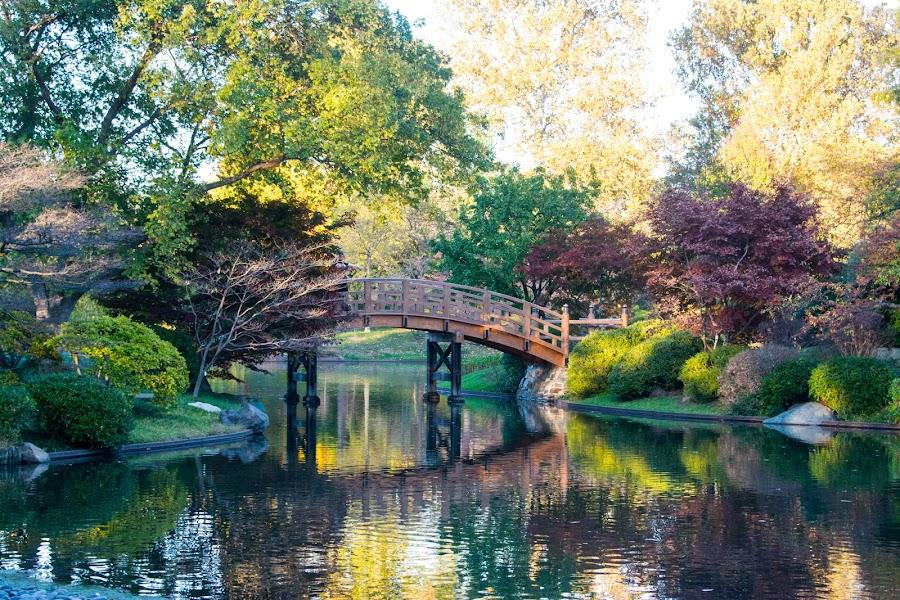 Japanese bridge by Jody Jedlicka - City,  Street & Park  City Parks ( reflections, japanese bridge, botanical, landscape, botanical gardens )