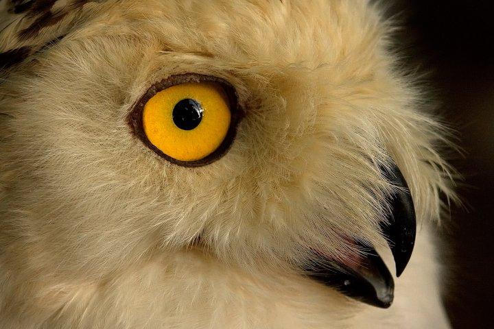 Occhio magnetico di Luca Capobianco
