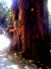 Photo: The redwood trees were AMAZING and HUGE!