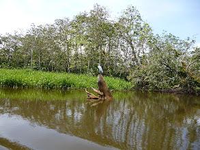 Photo: ...und Wasservögeln..