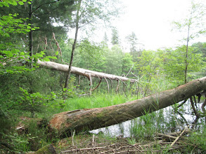 Photo: étang de Pfälzerwoog