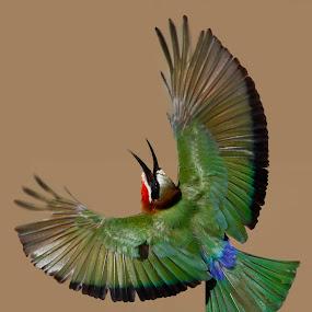 Wings by JD Lotz - Animals Birds (  )