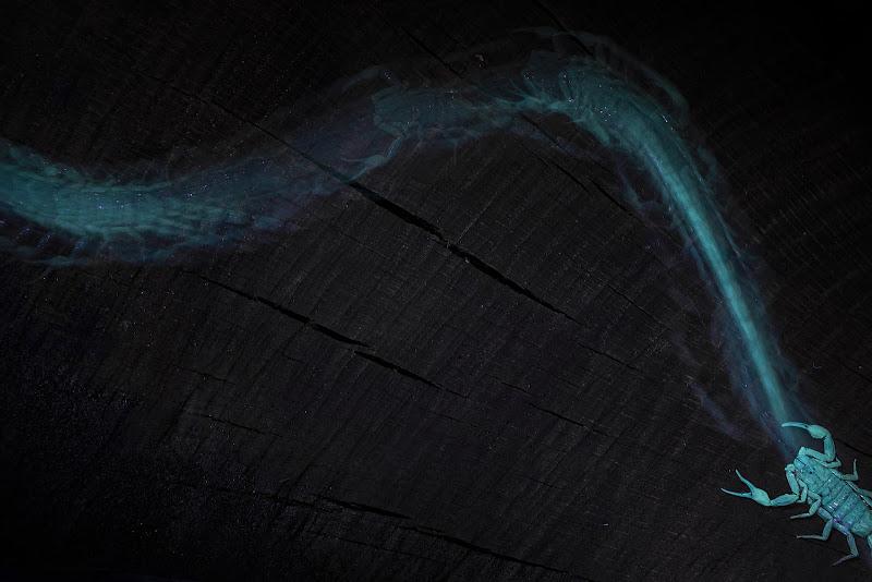 traces of light di fabio_sartori