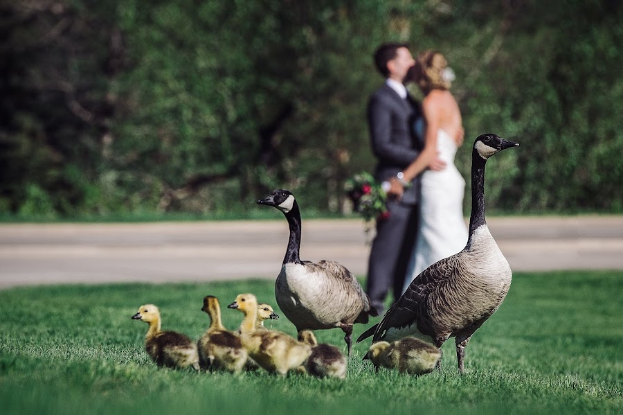 Wedding photographer Marcin Karpowicz (bdfkphotography). Photo of 23.05.2017
