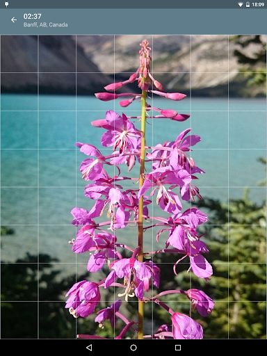 Jigsaw Puzzle: Flowers screenshot 10