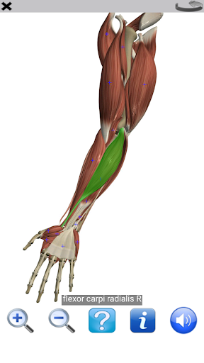 Visual Anatomy Free Screenshot